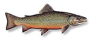 Trout (2)